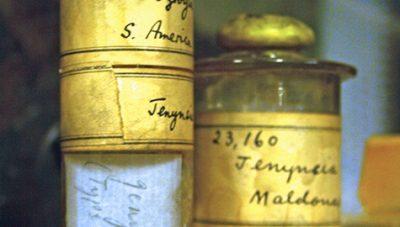Jenynsia - Darwin's jars at BMNH