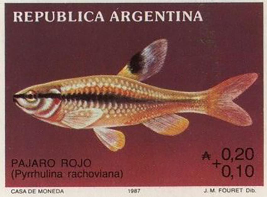 Pyrrhulina australis stamp
